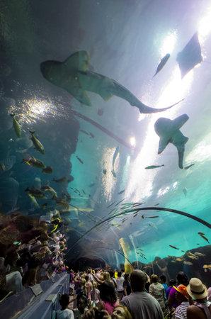 Plus Grand Aquarium Du Monde : grand, aquarium, monde, Crowded, Imágenes, Fotos, 123RF