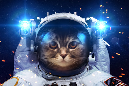 Beautiful cat in outer space. Stock Photo - 44449897