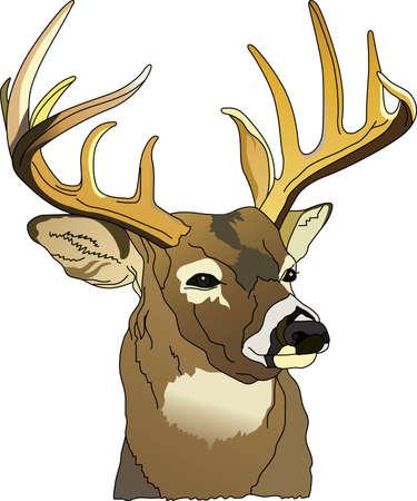 Buck Deer Clipart : clipart, Stock, Vector, Illustration, Royalty, Clipart