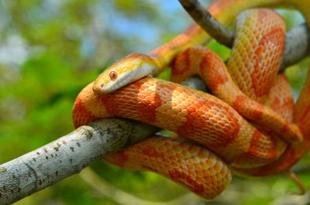 Serpent Amel Motley Mais Serpent Enroule Autour Dune Branche Banque D S