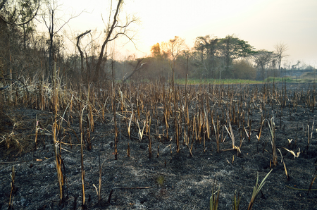 charred landscape: Burn forest ground Stock Photo