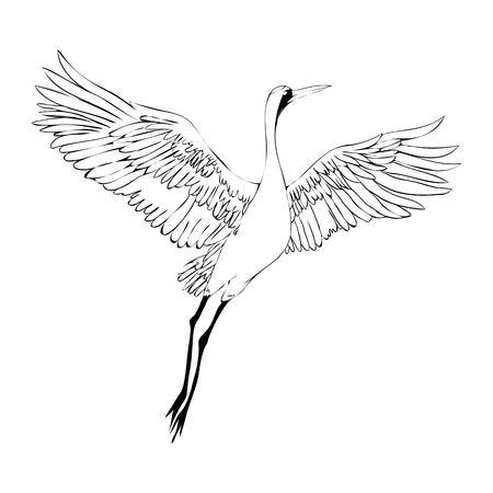crane bird stock photos
