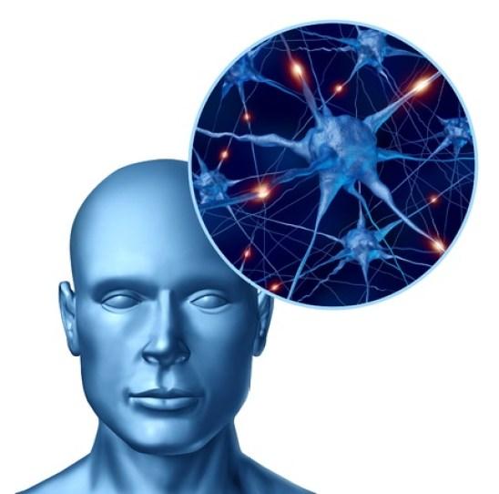 what are Neurotransmitter