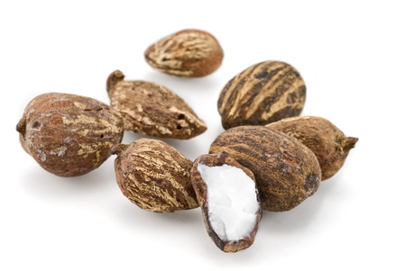 shea nuts Stock Photo - 8442686