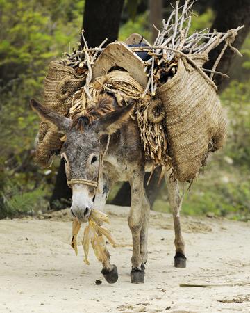 """Résultat de recherche d'images pour """"marie et joseph à dos d'âne"""""""
