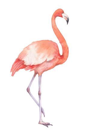 7 149 pink flamingo