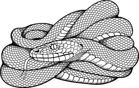 Tatouage Serpent En Noir Et Blanc De Serpent Enroule