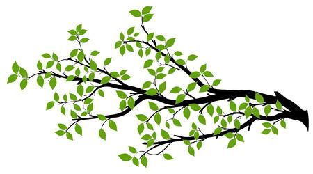 267 046 tree branch