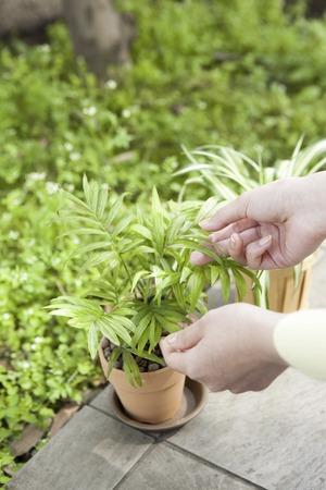 Gardening Stock Photo - 40145403