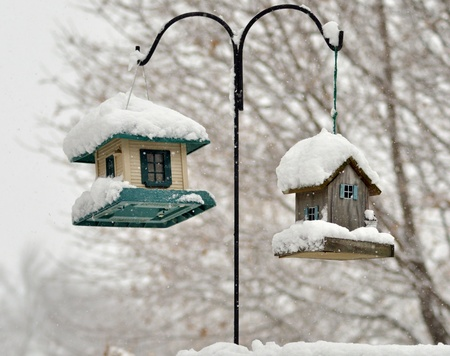 bird feeders in the winter park  Stock Photo - 8649009
