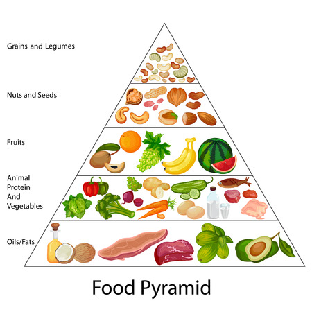 Education chart of food pyramid diagram stock vector also royalty free cliparts rh rf