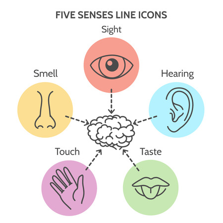 five senses diagram code alarm installation manual wiring line icons human ear and eye symbols nose mouth outline vector