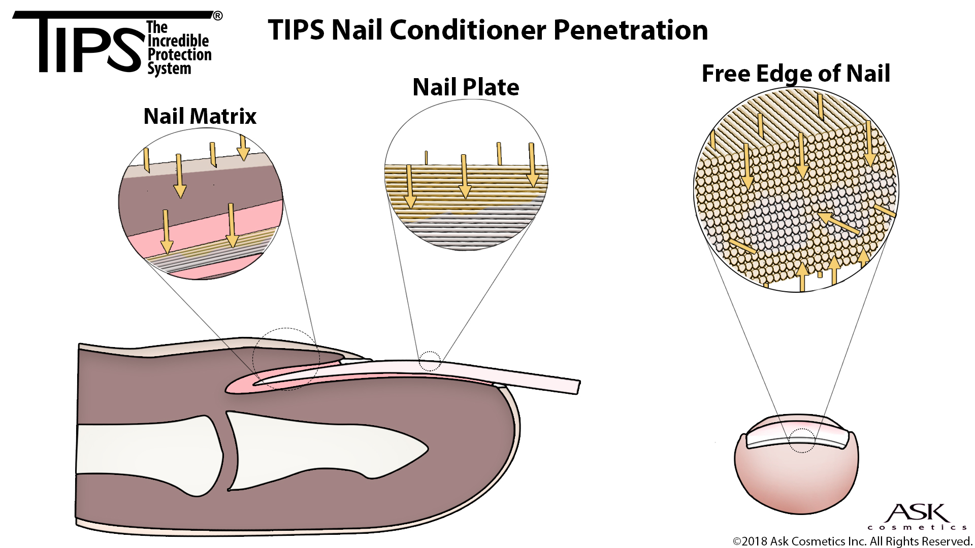 hight resolution of tips has been proven to penetrate deep into the nail by the california skin research institute