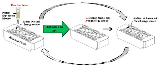 ExiProgen™ EC-Maxi Protein Synthesis Kit