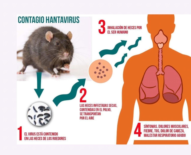 Confirmaron que en Jujuy no hay casos de hantavirus