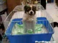 Puppy Sounds Like A Baby @ Yahoo! Video