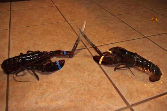 Image result for lobster fighting