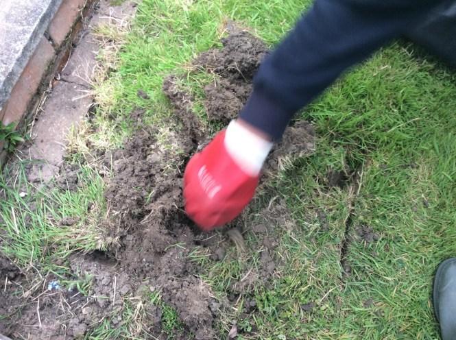 Ground Digger Wasp Den