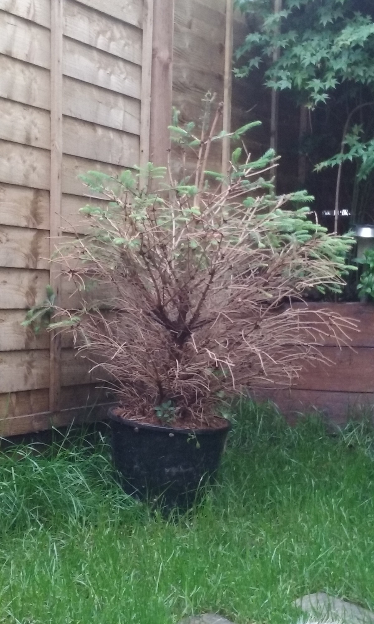 But I Ve Noticed Bottom Branches Are Not Growing Want