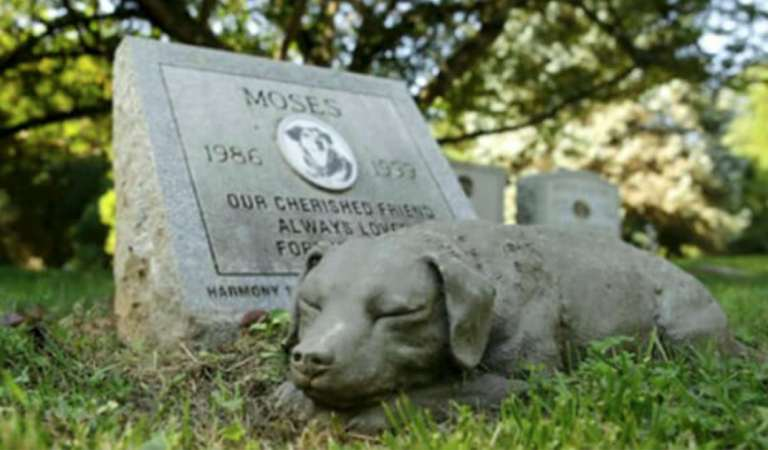 Great news: New law allows pets to be buried next to their humans in cemeteries