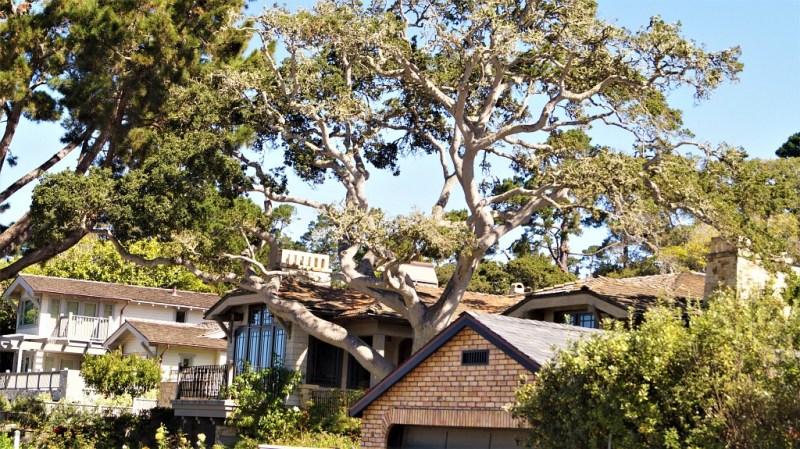 Bäume und Häuser in Carmel