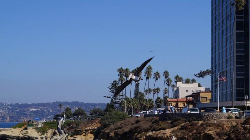 fliegender Pelican bei San Diego