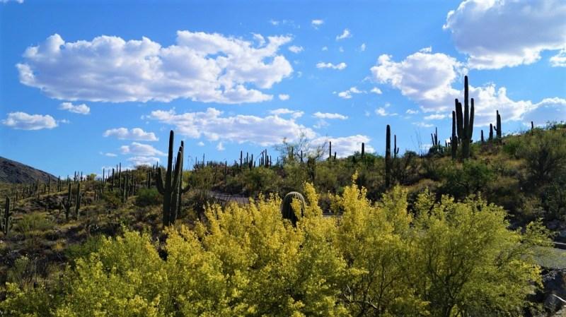 Saguaro Nationalpark East