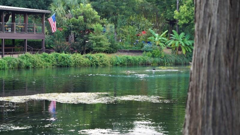 Rio Vista Park Banenenstauden