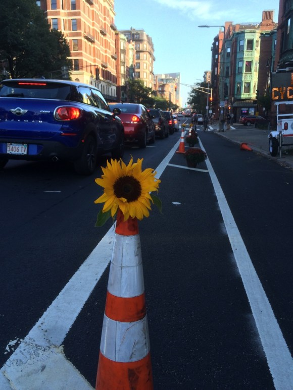 Boston cyclist Jonathan Fertig created a temporary protected bike lane in Boston this week using $6 potted mums he bought at the hardware store. Photo: Jonathan Fertig