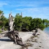 Sanibel Island: zon, zee, schelpen & wildlife