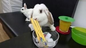 ミッシュちゃんお砂糖食べないでっ!4