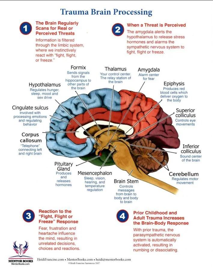 brain-trauma-processign