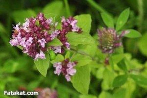 методы защиты сада и огорода от вредителей