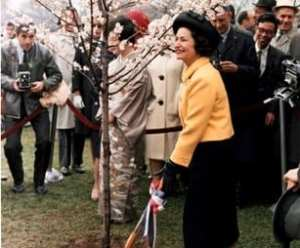First Lady Johnson with the Cherry Blossoms