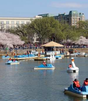 The paddleboats are popular in the warm months