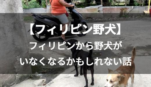 【フィリピン野犬情報】フィリピンから野犬がいなくなるかもしれない話