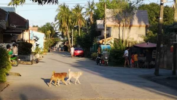 フィリピンの野良犬2匹