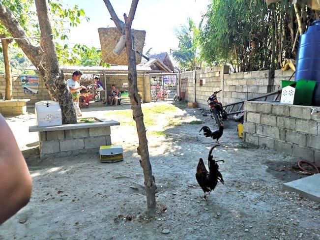 フィリピンで闘鶏場の鶏の控室