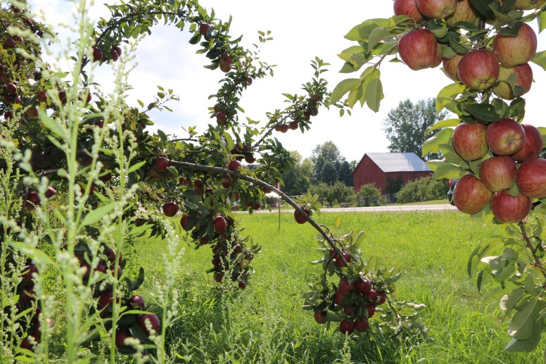 Apples along the way