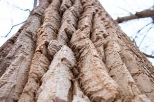 Corbett's Glen Park, Penfield, NY. www.usathroughoureyes.com