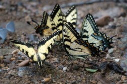 Blue Ridge Parkway - Butterflies. www.usathroughoureyes.com