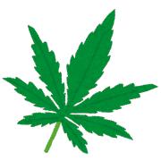【薬物】大麻の成分CBDが抗生物質として機能するかもしれない 淋病などの「耐性菌にも有効」