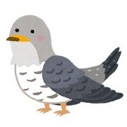 【進化】なぜ「鳥」は、進化の中で「歯」を捨てたのか?