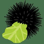 【養殖】駆除の「ウニ」、廃棄キャベツでおいしく変身!?