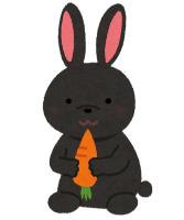【動物】「天然記念物」のアマミノクロウサギ、3匹相次ぎ交通事故死か・・