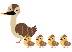 【いきもの】カモの親子が一列に泳ぐ理由は「うしろの子ガモに推進力を与えるため」だった