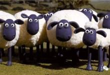 近期羊毛汇总
