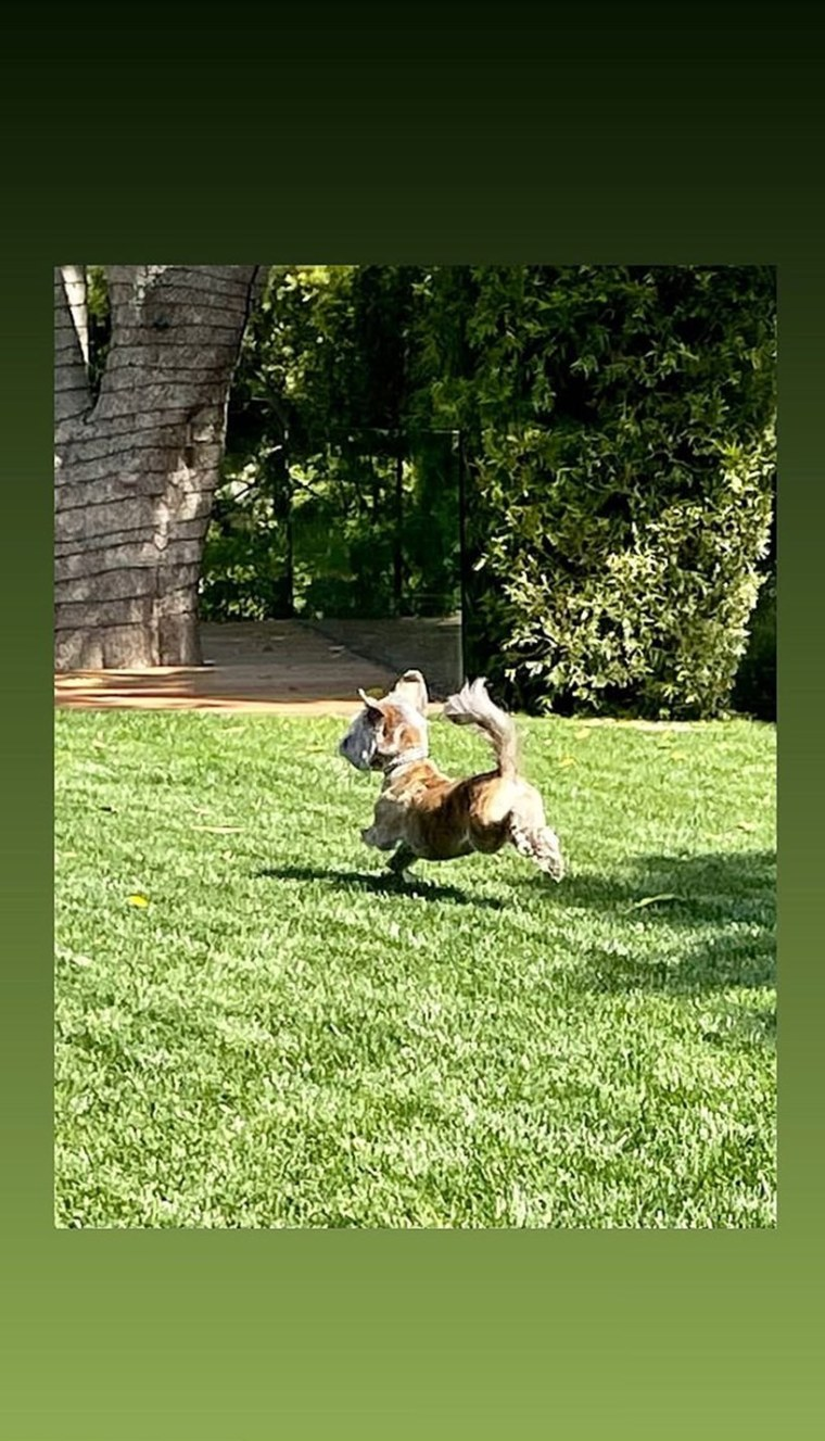 Jennifer Aniston Dogs Photos Instagram
