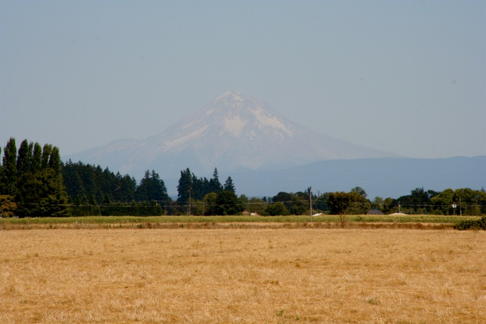 Mt. Hood overlooking the fields.