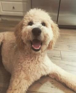 Duchess-pup2